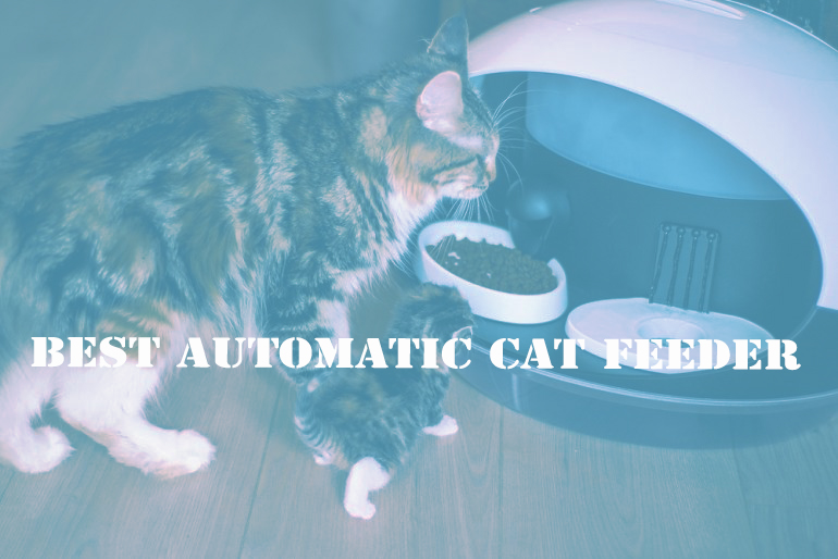 Few Tips to Buy Automatic Pet Feeder