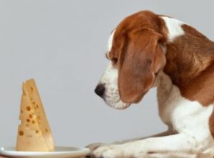 Pets cheese